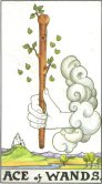 Tarot Meanings - Ace of Wands